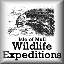 iomwildlifeexpeditions