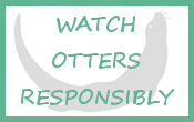 homepage_button_otter_watching