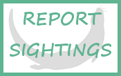 homepage_button_report_sightings
