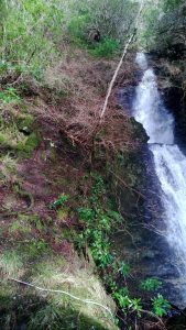 Otter slide, path