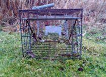Standard mink trap opening