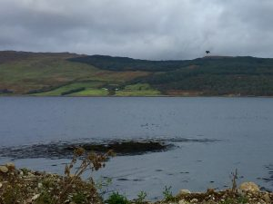 Eagle Fly Past at Knock Beach Clean