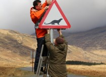 Putting up otter crossing road sign Kinloch, Isle of Mull