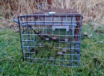 Mink trap with otter guard