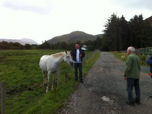Volunteers meet a horse at Knock beach clean